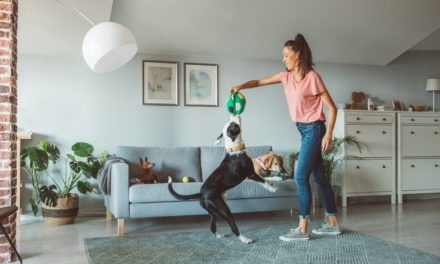 Top 5 Air Purifiers for Pet Odor and Dander in Your Living Room
